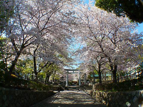 Hachiman_090423_0021