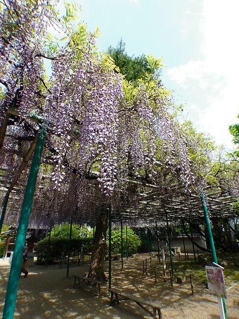 Sumiyoshi_004