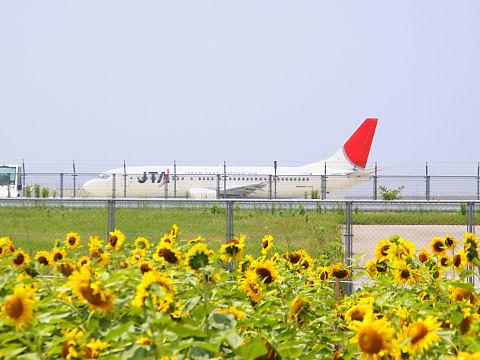 神戸空港のひまわり畑