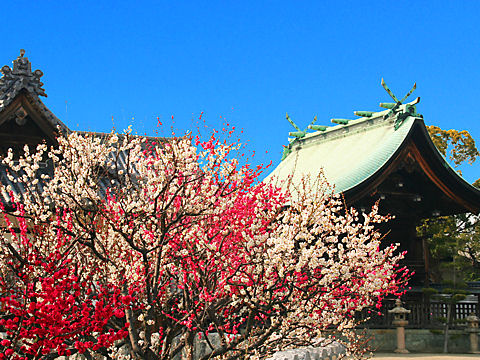 兵庫県 梅の名所