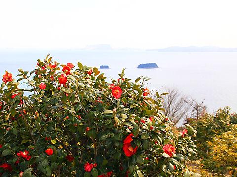 万葉の岬つばき園