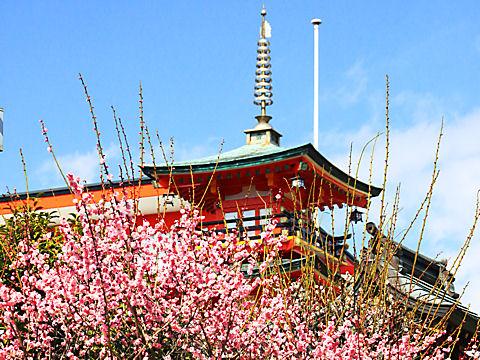 綱敷天満神社の梅