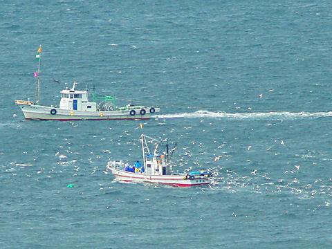 イカナゴのシンコ漁解禁