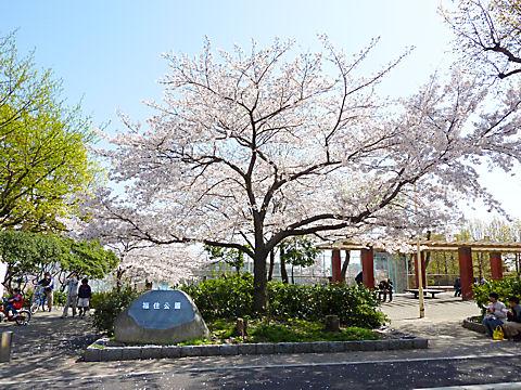 100404fukuzumi_0001