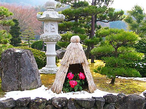 三田永沢寺花しょうぶ園の冬ぼたん