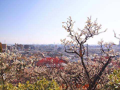 岡本梅林公園・摂津岡本梅まつり