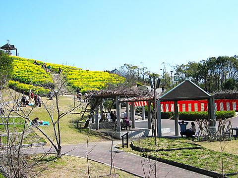 神戸総合運動公園・菜の花畑