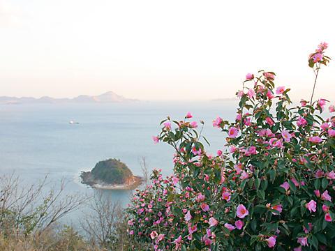 相生つばき園・万葉の岬と椿の花