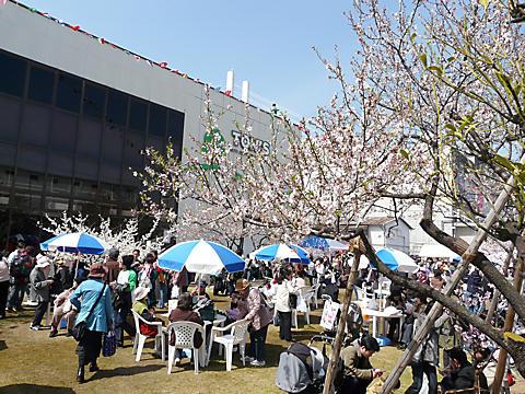 アーモンドフェスティバル・東洋ナッツアーモンド祭り