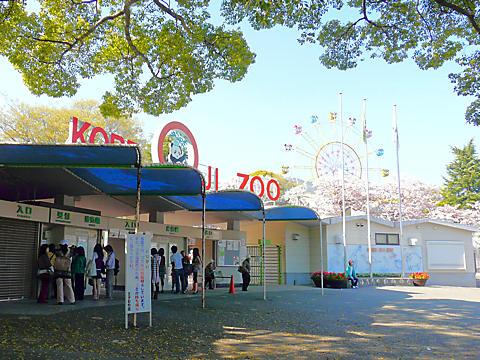 神戸王子動物園と桜
