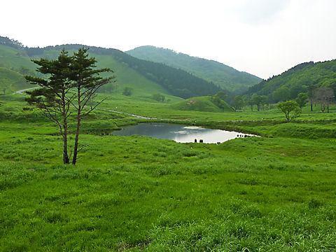 ノルウェイの森・砥峰高原