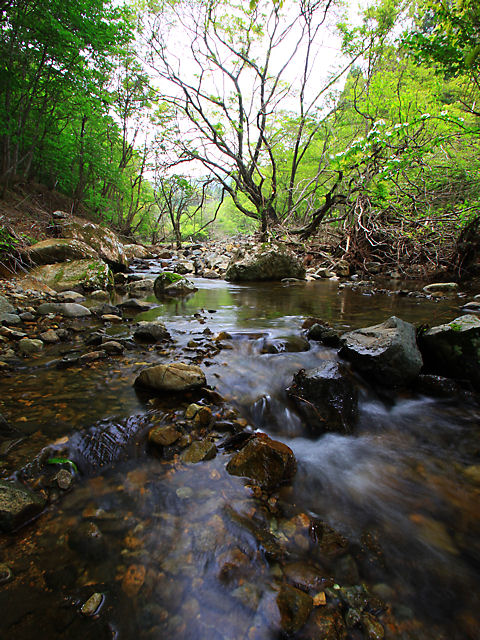 ノルウェイの森・新緑の谷川