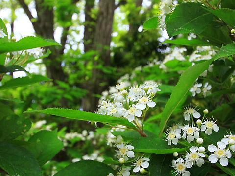 新緑の峰山高原と春の花