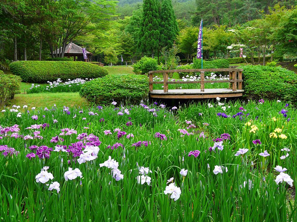 壁紙花菖蒲・北播磨余暇村公園