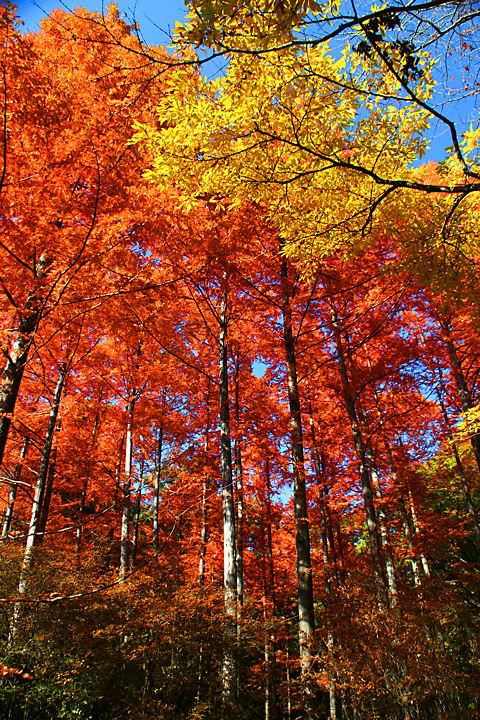 森林植物園 紅葉