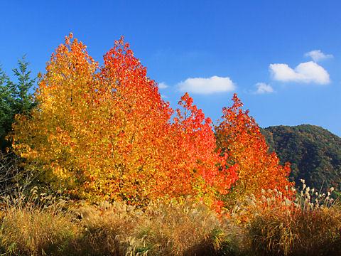 神戸・六甲山の紅葉