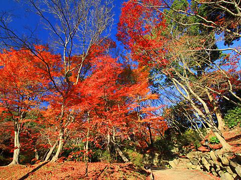 神戸須磨離宮公園の紅葉もみじ観賞会