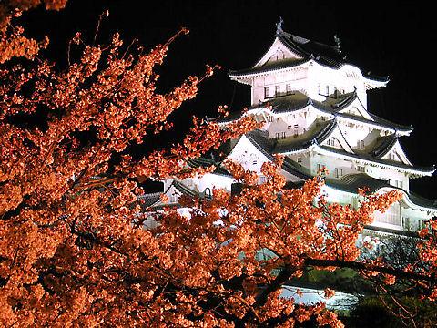 姫路城夜桜会