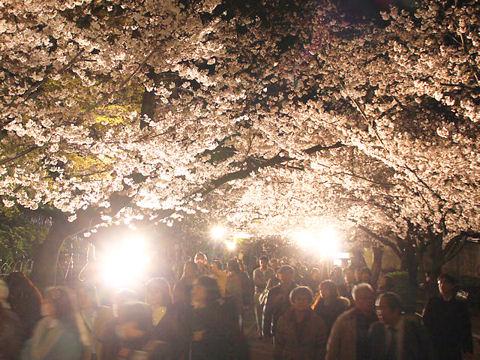 王子動物園の夜桜通り抜け