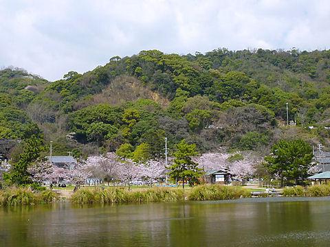 須磨寺大池・須磨寺公園の桜