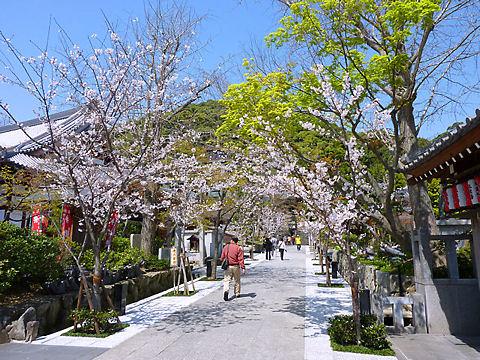 須磨寺の桜