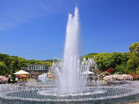 須磨離宮公園の桜