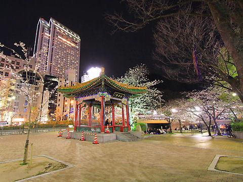 神戸市 生田川の桜のライトアップ・生田川公園の夜桜