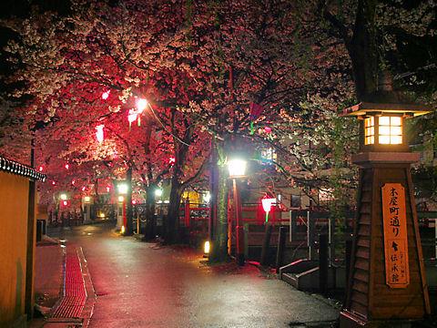 豊岡市 城崎温泉の夜桜・桜のライトアップ