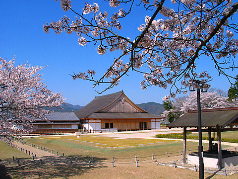 丹波篠山城の桜