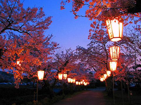 丹波篠山城の夜桜 / 桜のライトアップ