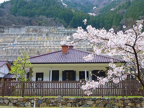 朝来市 神子畑選鉱場跡・ムーセ旧居・ムーセハウス写真館の桜