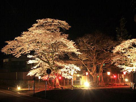 朝来市 神子畑選鉱場跡・ムーセ旧居・ムーセハウス写真館の桜のライトアップ、夜桜