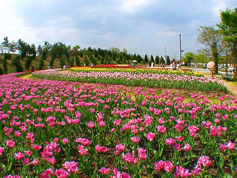 上郡町 光都チューリップフェア / 播磨科学公園都市光都チューリップ園