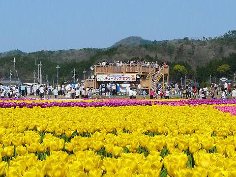 豊岡市 たんとうチューリップまつり / 但東町たんとう花公園