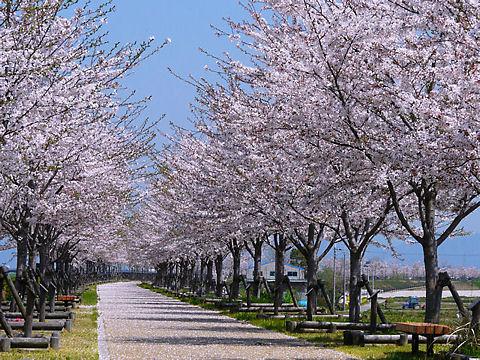 小野市 おの桜づつみ回廊