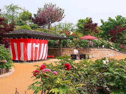 宝塚市 長谷牡丹園
