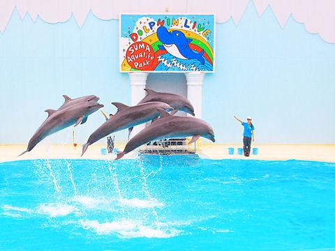 神戸市 須磨海浜水族園 イルカライブショー
