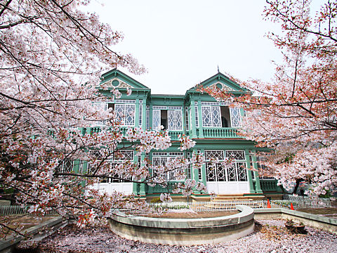 王子動物園の異人館と桜・旧ハンター住宅