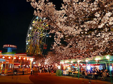 王子動物園夜桜通り抜け