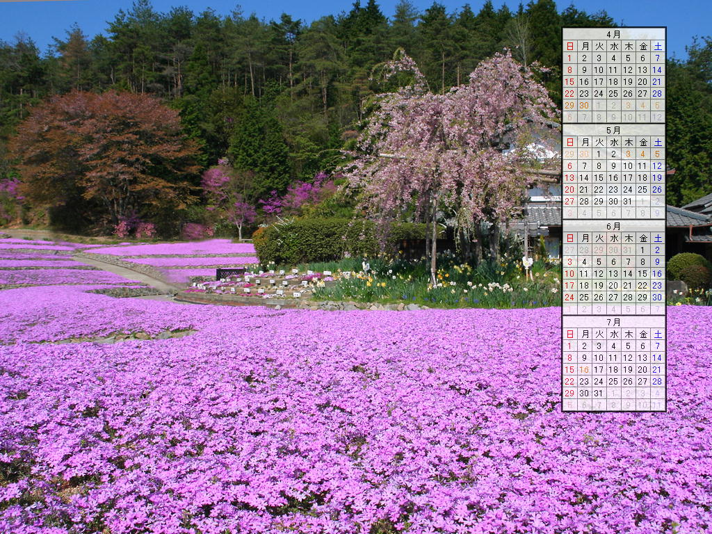 壁紙・芝桜(シバザクラ)の花/2007年無料壁紙カレンダー/2007年4月~2007年7月