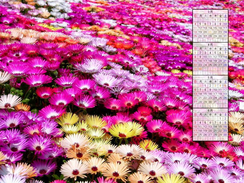 壁紙・お花畑・春のの花/2007年無料壁紙カレンダー/2007年4月~2007年7月