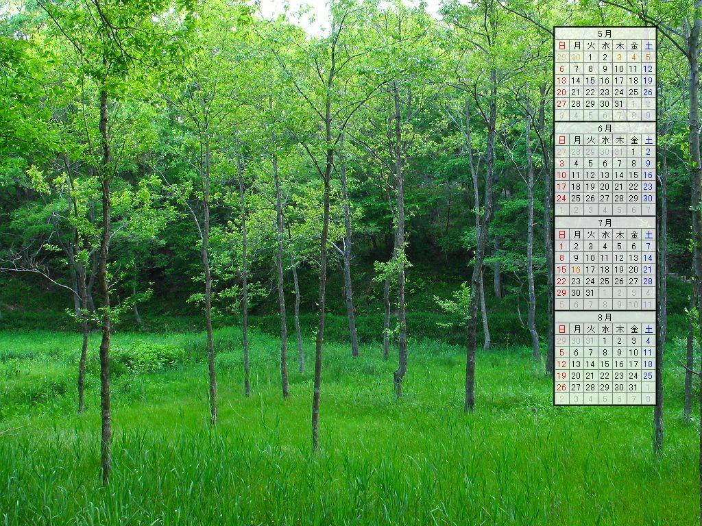 壁紙・新緑/2007年無料壁紙カレンダー/2007年4月~2007年7月