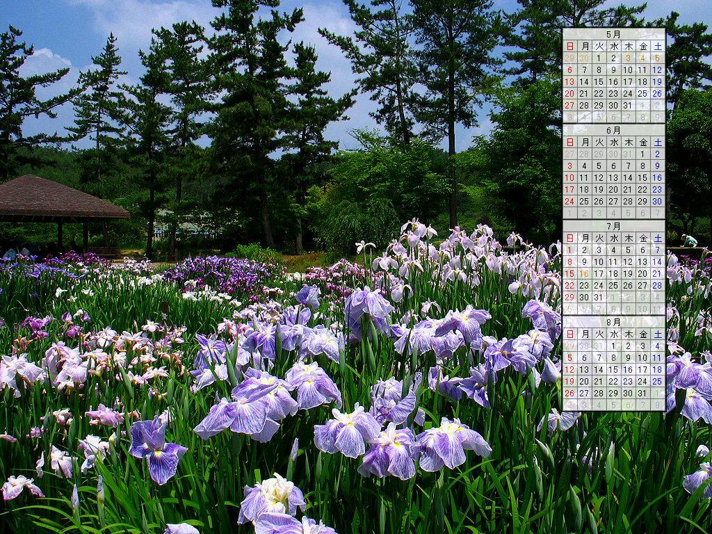 壁紙・花菖蒲(ハナショウブ)の花/2007年無料壁紙カレンダー/2007年4月~2007年7月