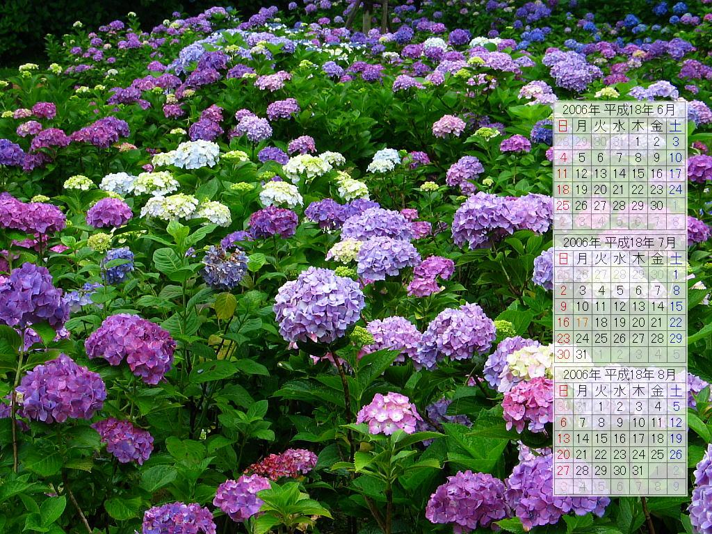 あじさい園 あじさいの花無料壁紙カレンダー 2006 ぶらり兵庫