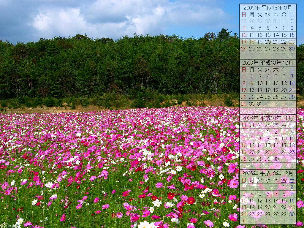 コスモスの花 コスモス畑 秋の花 デスクトップ壁紙カレンダー2006年