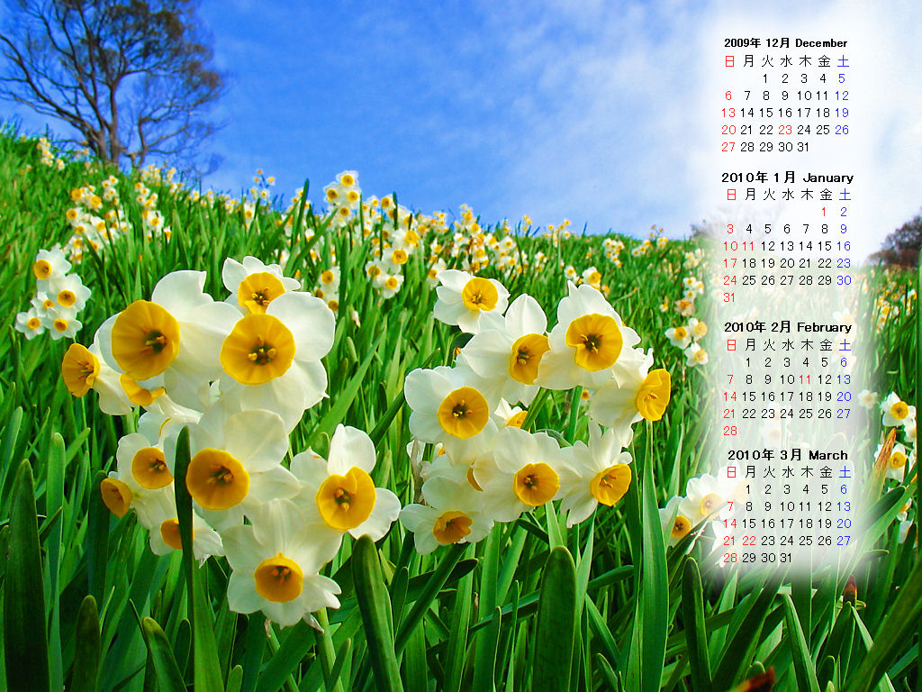 無料壁紙カレンダー 2009年12月のデスクトップカレンダー 冬の花